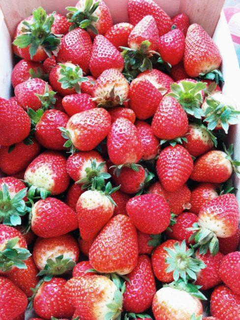 Fresh strawberries - Sugar free strawberry jam - SunCakeMom